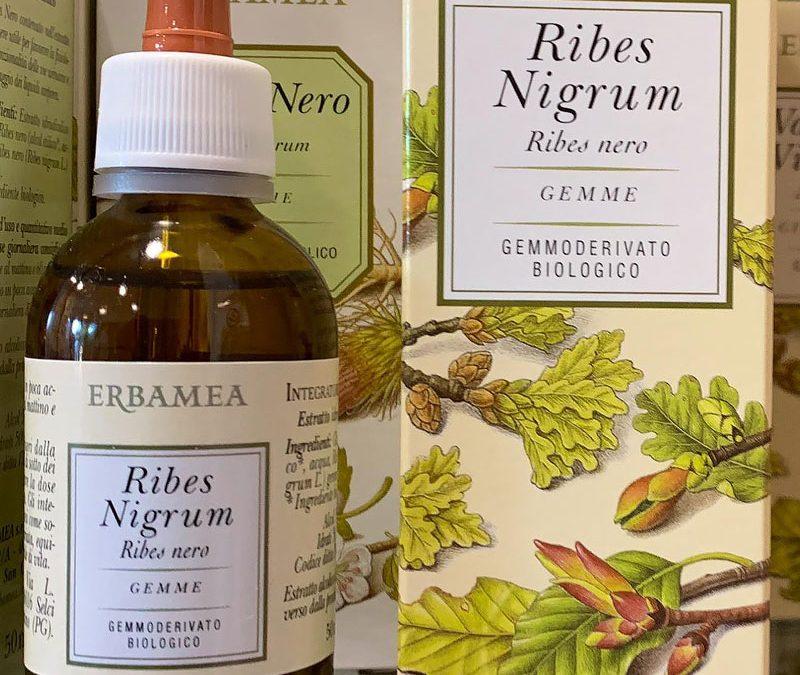 Ribes Nigrum e il suo uso per combattere le allergie!